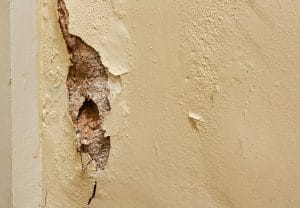 Čím se zbavit plísní na stěnách