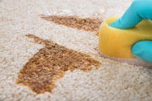 čištění koberců kvalitní chemií
