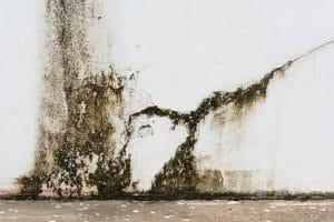 Plíseň na stěně v bytě
