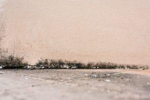 kdo ví jak účinně odstranit plíseň?