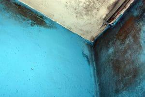 Odstranění plísně z vaší zdi raději přenechejte profesionálům!