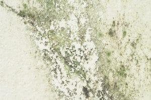 Odstranění plísní a dezinfekce fasády Praha