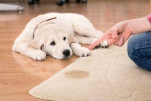 Čím vyčistit koberec od temperových barev