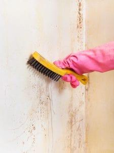 Pomocí čeho se zbavit plísně na stěně?