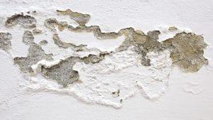 odstranění plísně a oprava fasády