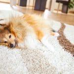 koberec bez chlupů