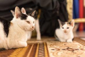 Domácí mazlíčci a koberce