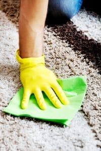 dôkladne vyčistený koberec