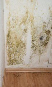 odstraňování řas a hub