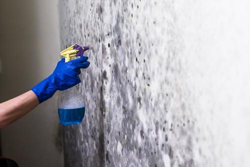 jak se zbavit plísně na stěně