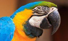Muž krmil v táborské zoo papoušky sušenkami. Ti mohli zemřít
